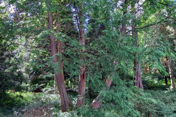 Arboretet 27