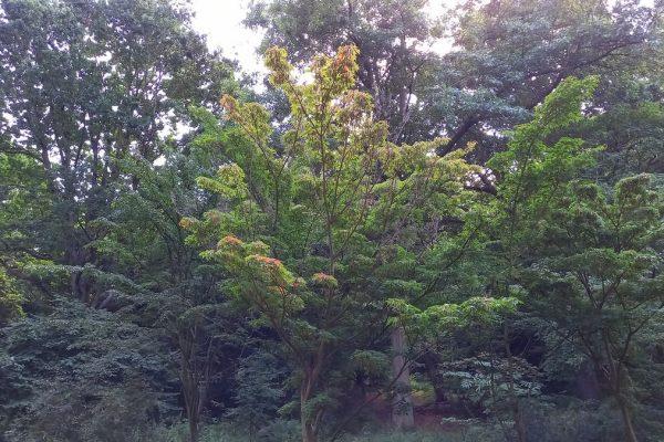 Arboretet 31