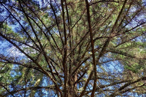 Arboretet 38