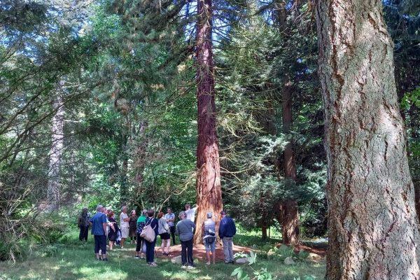 Arboretet 42