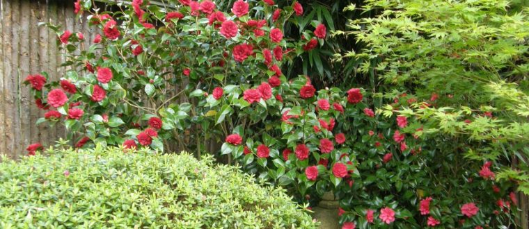 Blomster i den japanske have