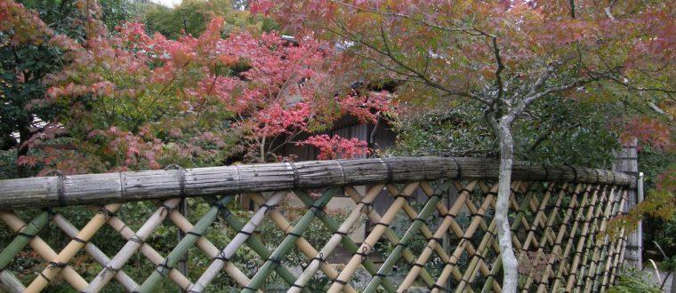Hegn i Japan