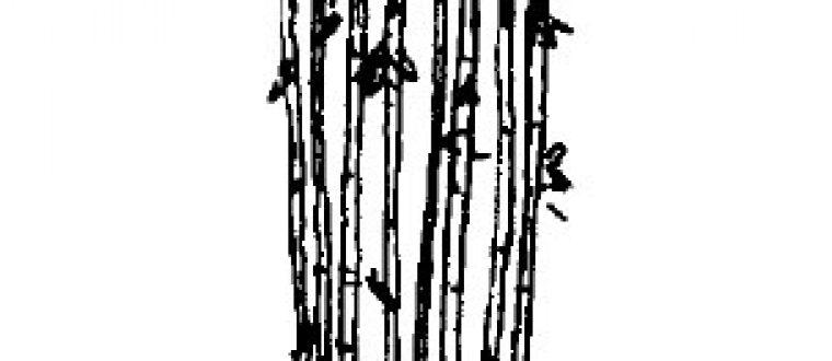 Bambus – Ideer og detaljer til haven