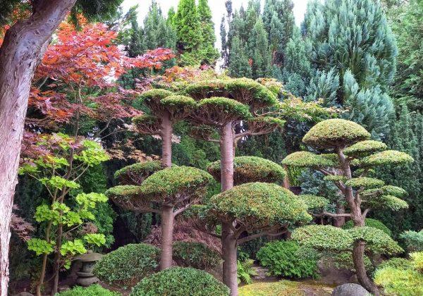 Japansk have og Arboretet i Hørsholm