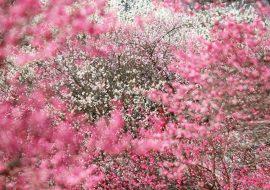 Træer_1_1800