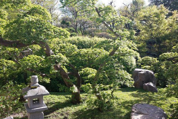 De Japanske Haver